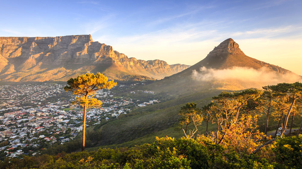 Lion's Head - Nature The Cape Town Big Five